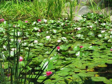 Flowers, Water, Foliage, Lichen, Pond, Poland
