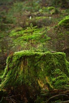 Tree, Forest, Fir, Moss, Nature, Live, Live New