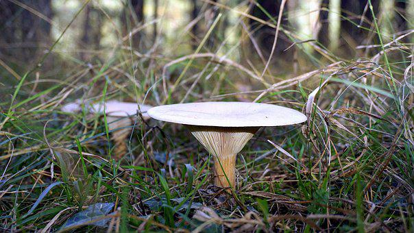 Mycology, Nature, Boletaire, Forest, Food, Mountain