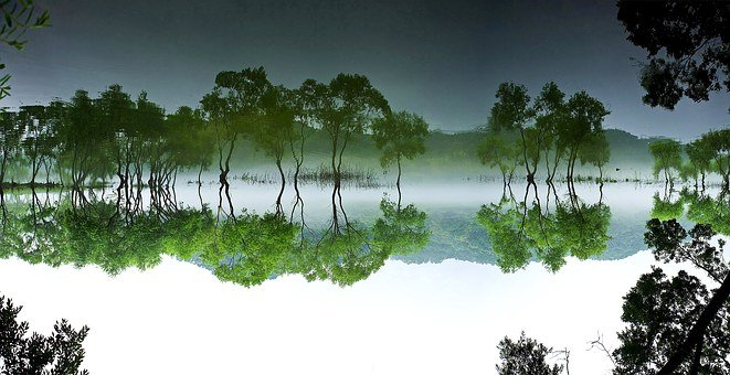 Daechung, Forest, Lake, Landscape, Water, Nature, Wood