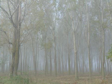 Forest, Trees, In The Morning, Fog, Late Autumn