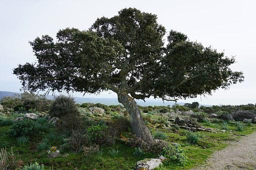 Tree, Nature, Trees, Green, Wild, Uncontaminated, Wood