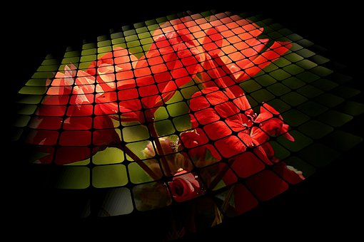 Three D Grid, Red, Flower, Nature, Plant, Digital Art