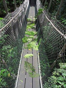 Bridge, Hanging Bridge, Soft Bridge, Rope Bridge, Way