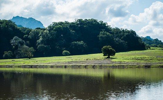 Landscape, Tree, Nature, Grass, Sky, Green, Field