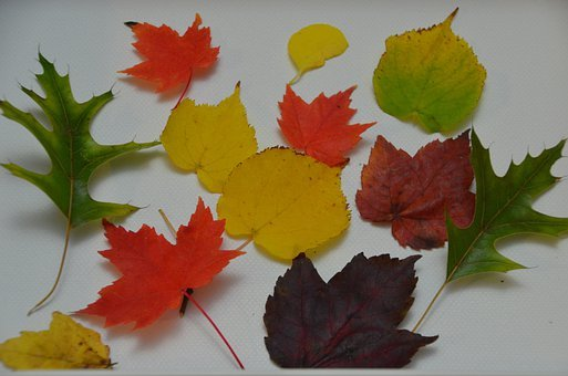 Screen Background, Leaves, Fall, Plant, Natural