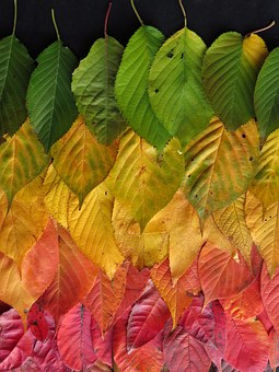 Leaves, Autumn, Colourful, Autumn Leaves, Fall, Rainbow