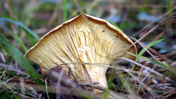Mycology, Mushroom, Boletaire, Forest, Food, Mountain