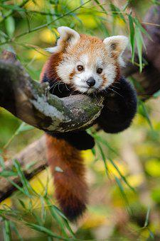 Adorable, Animal, Baby, Blur, Branch, Cute, Fur, Grass
