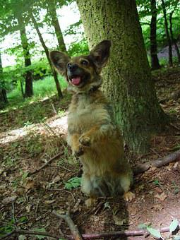 Standing Dog, Waiting Dog, Dog In The Woods, A Hybrid