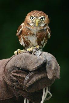 Animal, Beak, Bird, Bird Of Prey, Feathers, Gloves