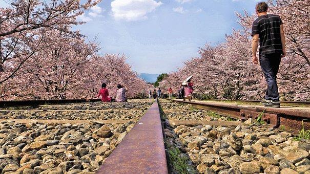 Gleise, Japan, Cherry Blossoms, Romantic, Charming, Man