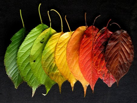 Autumn Leaves, Leaves, Colourful, Autumn, Fall