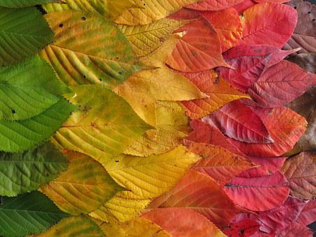 Autumn Leaves, Colourful, Leaves, Autumn, Fall, Rainbow