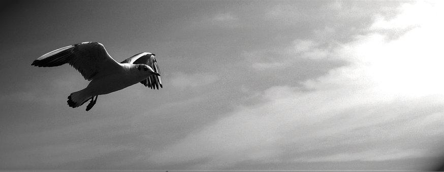 Gulls, Animals, Birds, Snapshot, Sky