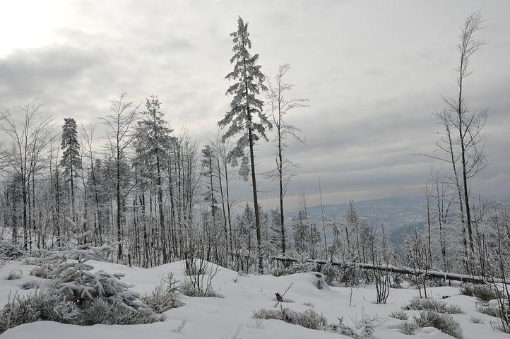 Winter, Snow, Mountains, Forest, Tree, Biel, Frost