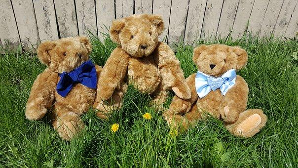 Teddy, Bear, Grass, Three Bears