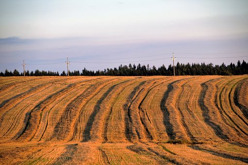 Field, Harvested, The Undulating, After The Harvest