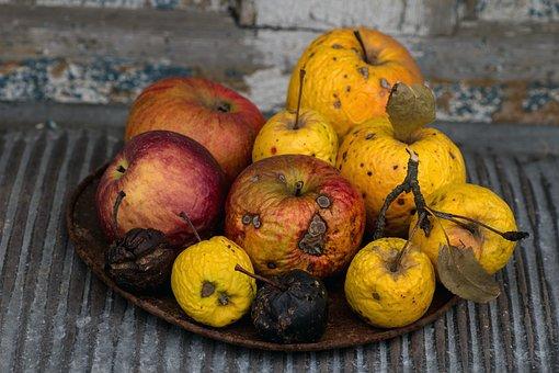 Still Life, Apple, Shell, Ripe, Fruit, Dry