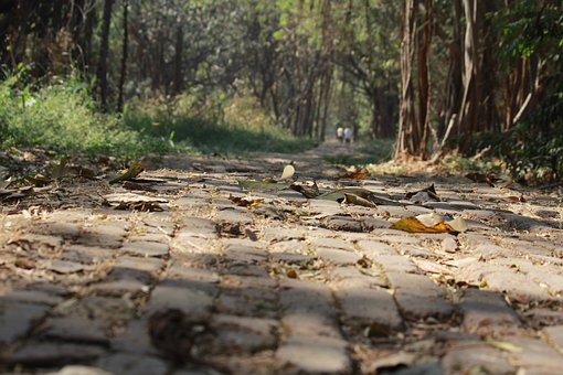 Cobblestone, Pathway, Ground, Greenery, Path, Outdoor