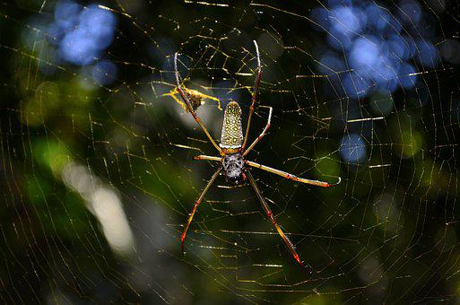 Arachnid, Cobweb, Color, Creepy, Insect, Invertebrate