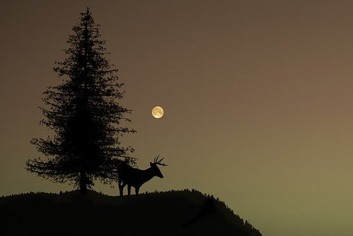 Nature, Tree, Deer, Night, Moon, Silhouette, Dark