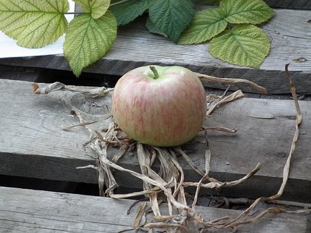 Apple, Fruit, Ripe, Green, Tree, Garden, Grass, Sheet