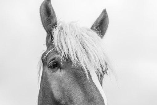 Horse, Head, Animal, Horses, Landscape, Ear, Horse Head