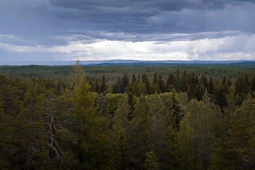 Forest, Tree, North, Rainy