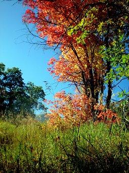 Seasons, October, Outdoor, Autumn, Fall, Nature