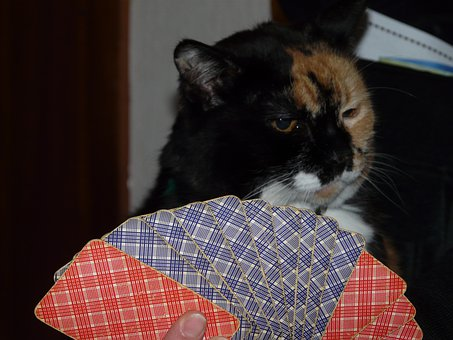 Cat, Cards, Play, Card Game, Lack Of Interest