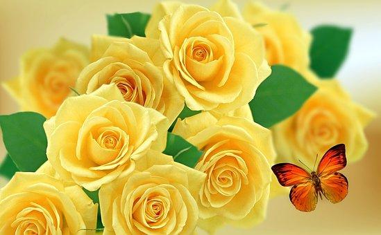 Yellow Rose, Rosa, Roses, Nature, Flower, Rose Bush
