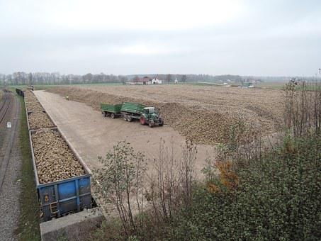 Sugar Beet, Tractor, Harvest, Wealth, Arable