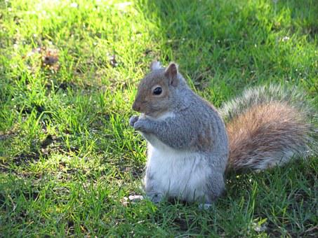 Nature, Squirrel, Victoria, Beacon Hill Park