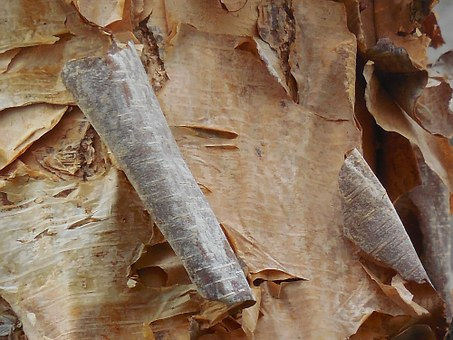 Birch, Bark, Tree, Nature, White, Texture, Natural
