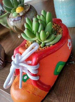 Succulent Plant, The Fleshy, Plant, Fleshy, Boots, Wok