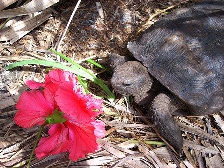 Turtle, Box Turtle, Land Turtle, Animal, Wildlife, Wild