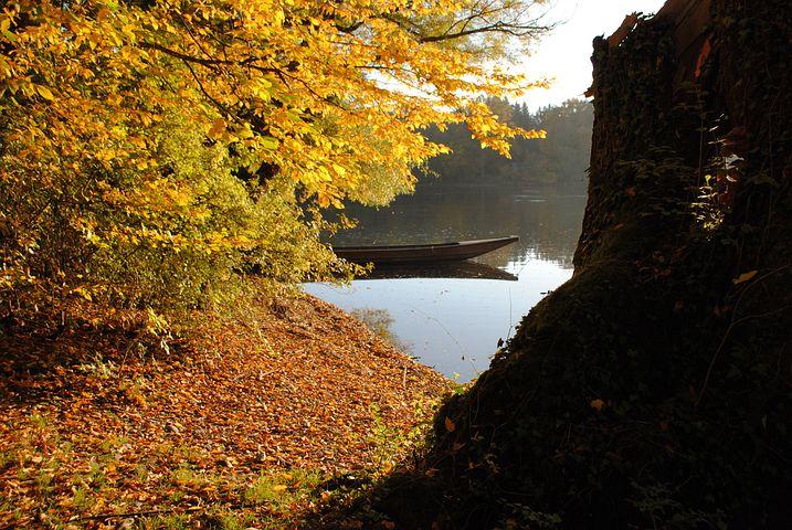 Autumn, Fall Foliage, Golden Autumn, Waidling, Rhine