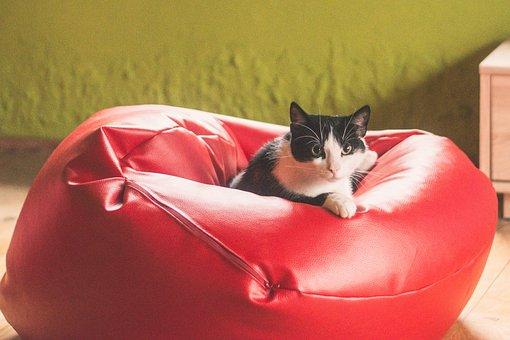 Cat, Kitten, Tomcat, Animals, Black And White, Coat