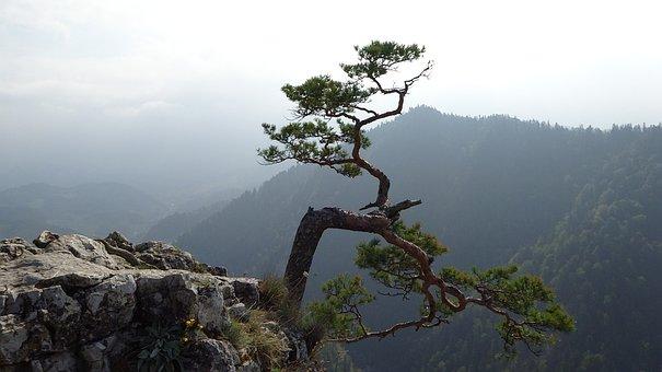 Pieniny, Poland, Mountains, Landscape, Tree, Top