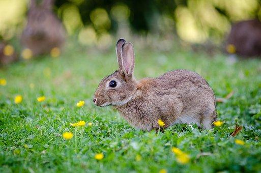 Animal, Bunny, Cute, Field, Grass, Lawn, Little