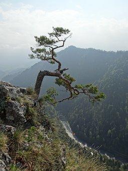 Pieniny, Poland, Mountains, Sokolica, Top, Landscape
