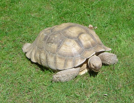 Turtle, Animal, Tortoise, Zoo, Close-up, Armor, Shell