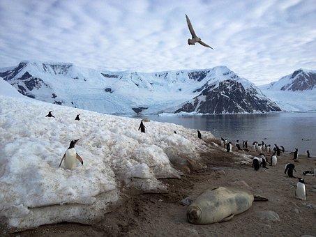 Antarctica, Penguins, Animals, Tourism, Wilderness