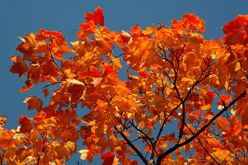 Leaves, Autumn, Fall Color, Colored, Bright, Strong