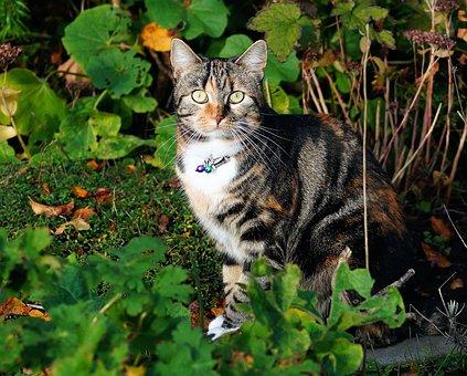 Cat, Female, Portrait, Pet, Graceful, Fur, Animal