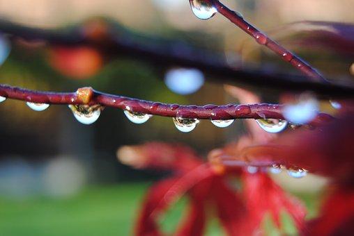 Drip, Acer, Bubble, Clear, Dew, Dewdrop, Dribble, Drop