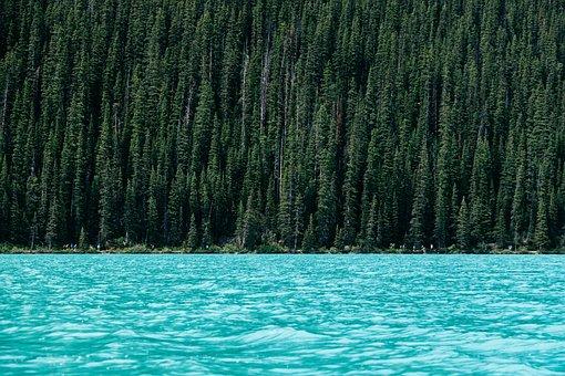 Conifer, Daylight, Foliage, Forest, Idyllic, Lake
