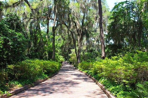 Path, Brick, Trees, Stone, Outdoor, Garden, Sidewalk
