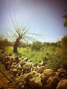 Greece, Mani, Greek, Olive Tree, Kardamyli, Kalamata